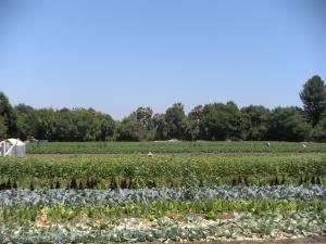 Tapia Farms 014